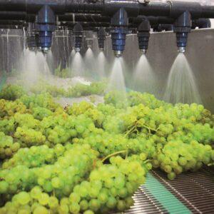 Grape Washer